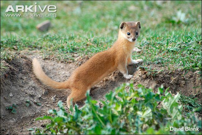 Quel est cet animal qui peut mettre au monde des portées de 13 petits ?
