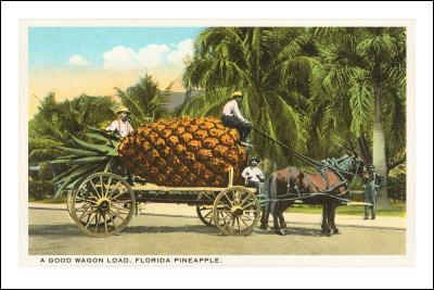 L'ananas est un fruit :