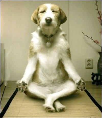 Bouddha est un dieu :
