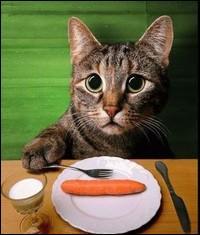 Chat  ne va pas de ne donner que ça ? Être végétarien entraîne des carences :