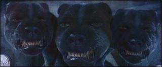 Qui est ce chien à 3 têtes ?