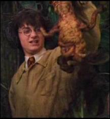 Lequel de ces personnages de Harry Potter n'a jamais été professeur de botanique ?