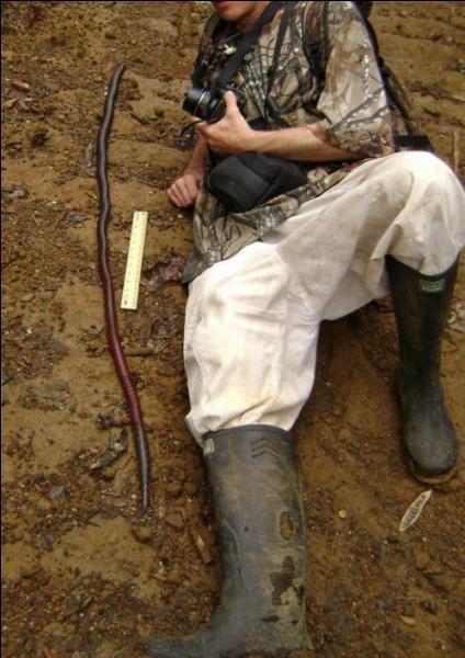 Sur cette photo, on voit un homme allongé à côté d'un serpent !