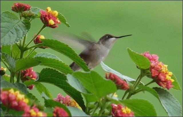 Un oiseau peut peser moins de deux grammes !