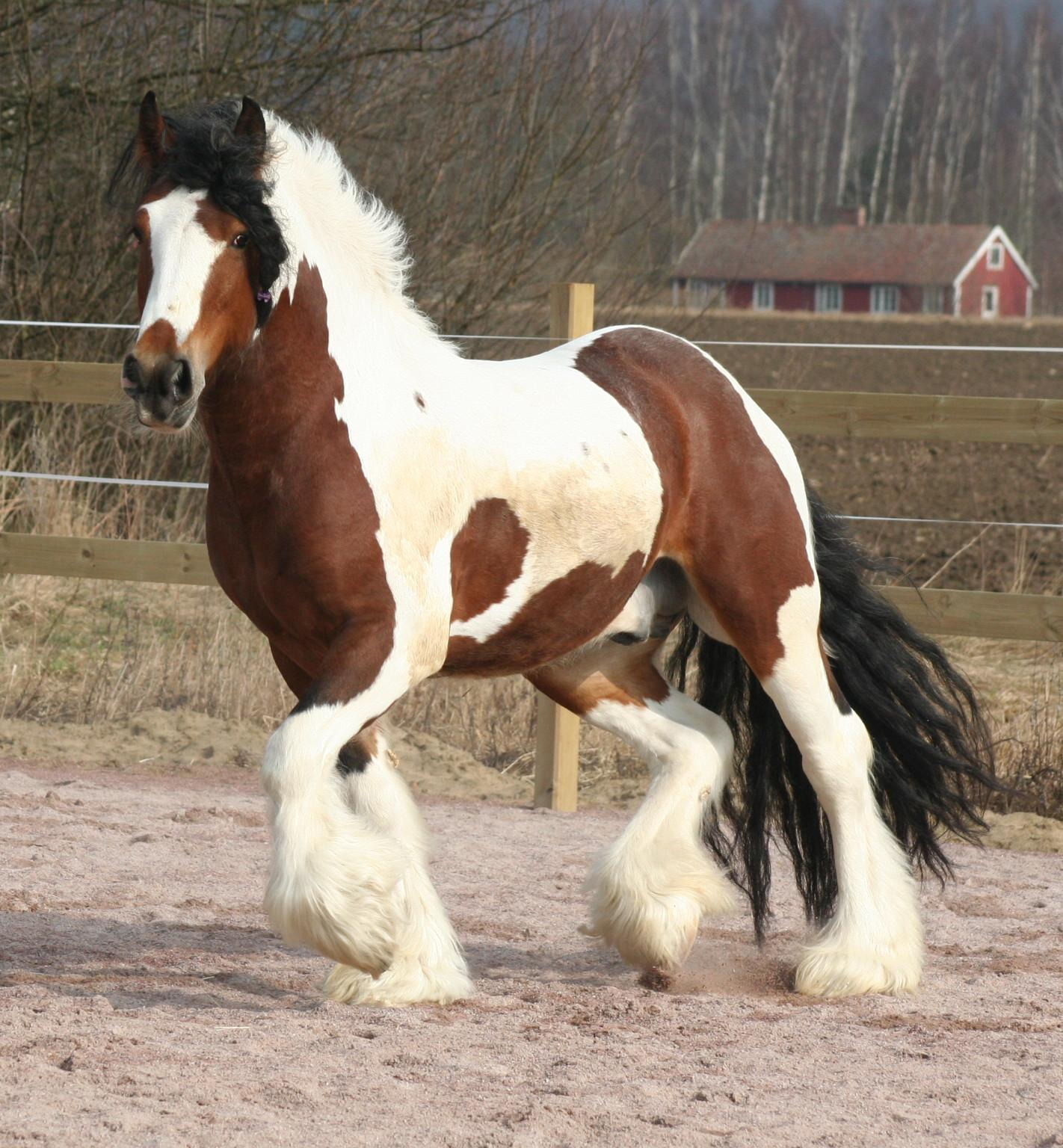 30 questions sur l'équitation