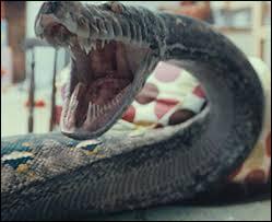 Comment s'appelle le serpent de Lord Voldemort ?