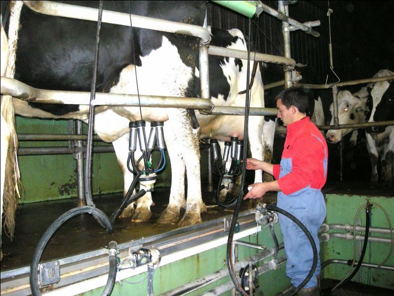 Quel métier consiste à entretenir des animaux pour la viande ou pour le lait ?