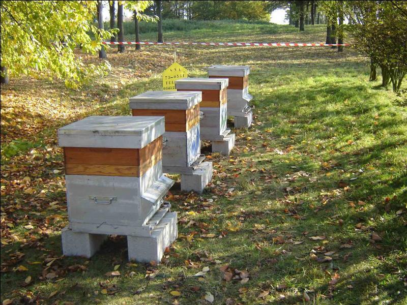 Quel métier consiste à élever des insectes piquants producteurs de miel et de gelée royale ?