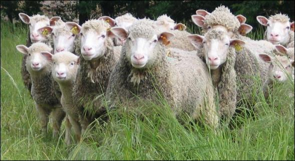 Quel est le nom de ce métier plutôt d'autrefois, où l'on flânait en gardant des troupeaux de moutons sur les alpages ?