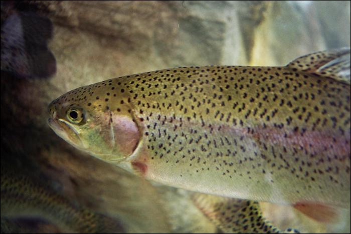Quel métier consiste à élever des poissons ?
