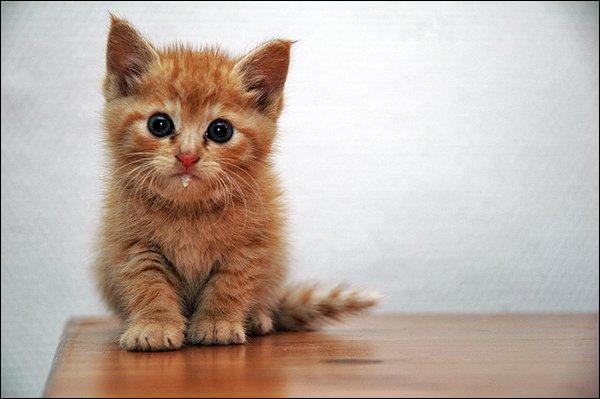 Quel est le record de longévité de vie d'un chat ?