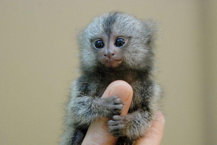 341- Le quiz mignon : Quelques bébés animaux trop mimis !