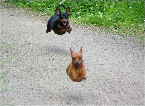 Ils ne leurs manqueraient pas des pattes ? Dans ma maison, j'ai 4 chiens, il y a moi et mon fils, combien y a-t-il de pieds ?