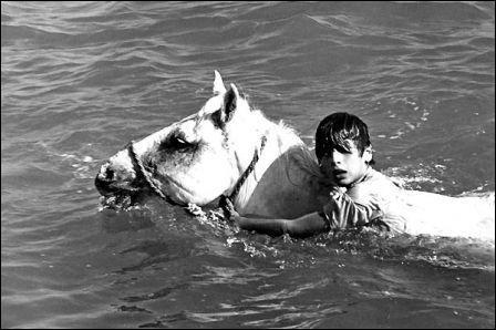 Quel film magnifique d'Albert Lamorisse d'après un livre de René Guillot se déroulant en Camargue, raconte l'amitié entre un jeune garçon et un cheval ?
