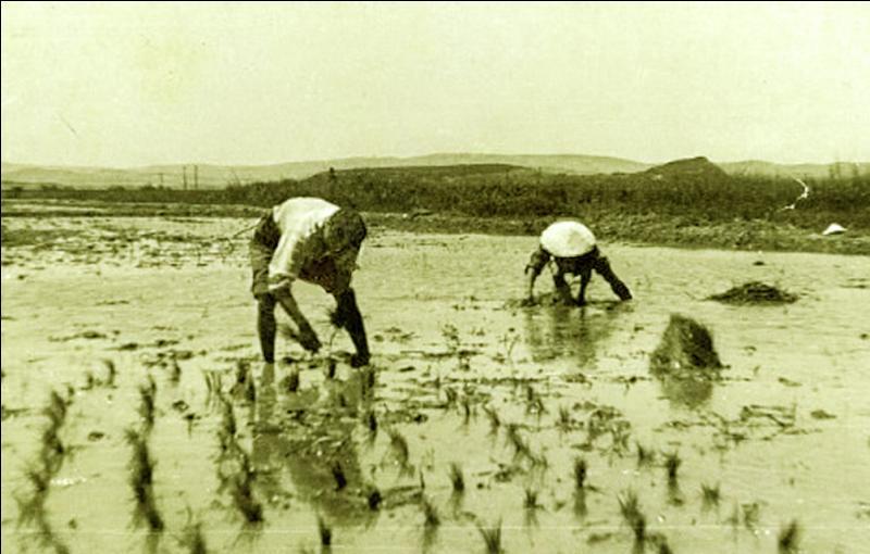 Dans les années 40, le régime de Vichy décida de transférer des étrangers alors détenus aux Baumettes. Ils les mirent à disposition d'entreprises privées, aux tâches les plus difficiles, avec des salaires dix fois moins élevés, en Camargue, pour développer la riziculture afin de répondre à la pénurie de riz de 1942. De quel pays venaient-ils ?