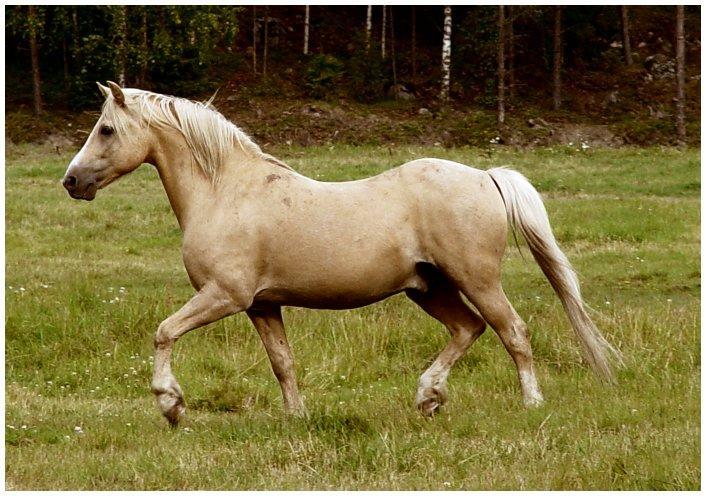Équitation galop 1 & 2