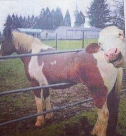 Voici le cheval que j'ai monté ! Oh, un animal nous sourit, quel est son nom ?