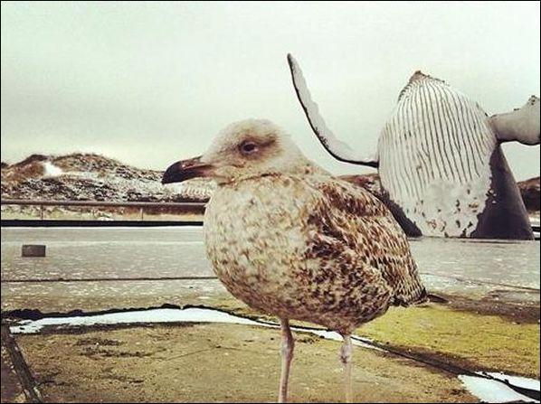 Oh la mouette ! Quel animal marin a décidé de s'incruster dans la photo ?