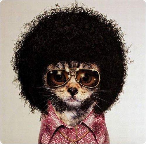 À qui ressemble ce petit chat ?