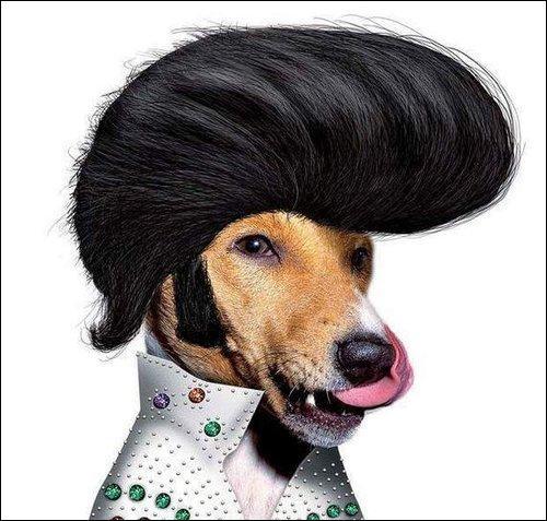 À qui ressemble ce chien ?