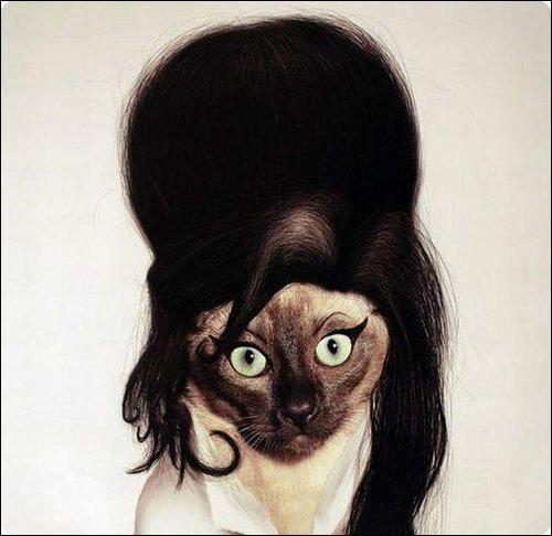 A qui ressemble ce chat ?