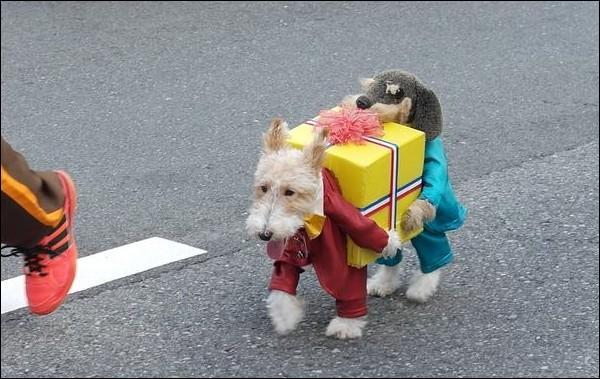 Combien y a-t-il de chiens vivants sur cette photo ?