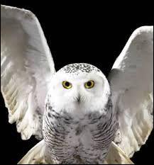 Comment meurt Hedwige ?