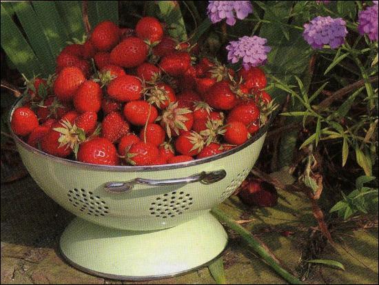 Dans quel département sont produites les fraises de Samer ?