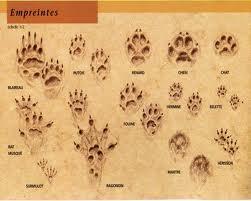 Les empreintes des animaux