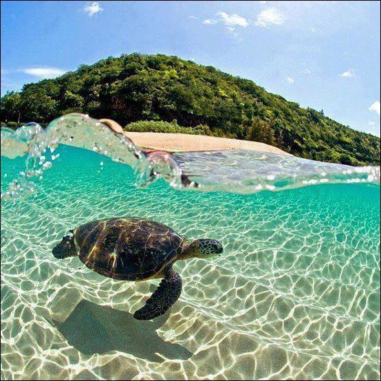 Extrêmement Quizz Les animaux marins - Quiz Animaux, Marins CV27