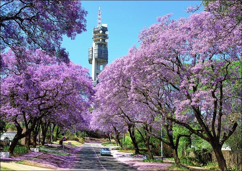 Quel est le nom de la région la plus riche d'Afrique, localisée en Afrique du Sud ?