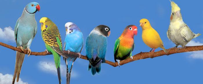 Des noms d'oiseaux ?