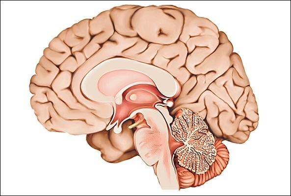 Où sont stockées les émotions dans le cerveau ? dans ...