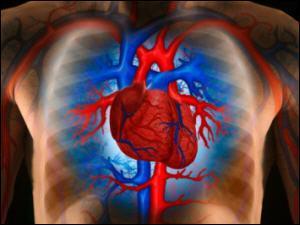 Si votre rythme cardiaque est trop bas, vous souffrez de ...