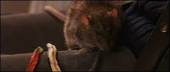 Croutard est le rat de Neville.