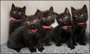 Pour quelle raison ces 5 chats ont-ils fait parler d'eux ?