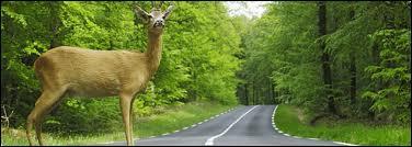 En Géorgie, quel animal n'a pas le droit de traverser la route ?