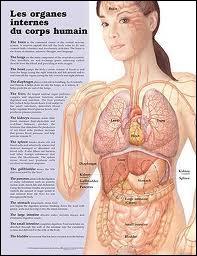 Sciences - Quel est l'organe le plus transplanté dans le monde en 2013 ?