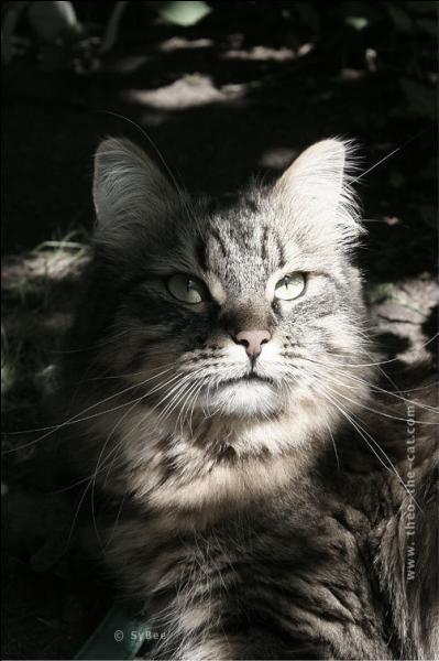 """Qui a écrit dans un poème bien connu """"Mon chat sur le carreau cherchant une litière, agite sans repos son corps maigre et galeux ... """" (sans doute un jour de cafard ! )"""