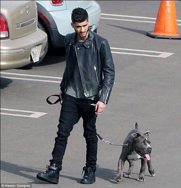 Zayn Malik S Dog Harley
