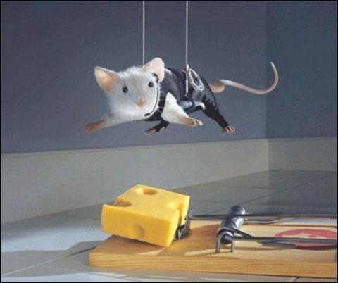 Et pour finir, est-ce vrai que les souris aiment le fromage, en général ?