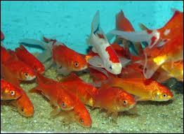 On l'aime le vendredi . Quel est le pluriel de  poisson  en anglais ?