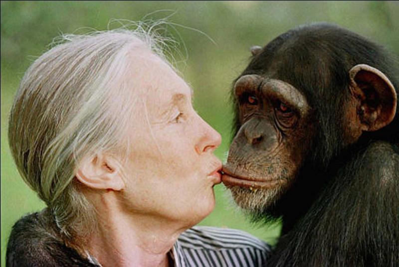 Eux aussi ont des rites funéraires, eux aussi utilisent des outils, eux aussi encouragent les leurs, eux aussi ont des sentiments ! Voila ce que cette femme, une primatologue a découvert !