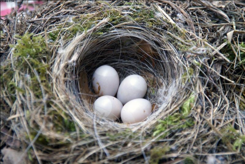 Comme l'oiseau qui fait son nid.