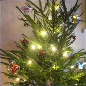 C'est tout à fait interdit, mais pour économiser, nous avons coupé notre sapin de Noël dans la forêt :