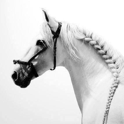 Équitation - Galop 1