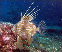 Quel est ce poisson dont le filet vous ouvre les portes du Paradis ?