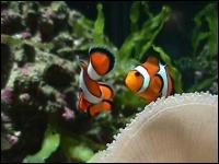 Quel est ce poisson qui n'a pas fini de nous faire rire ?