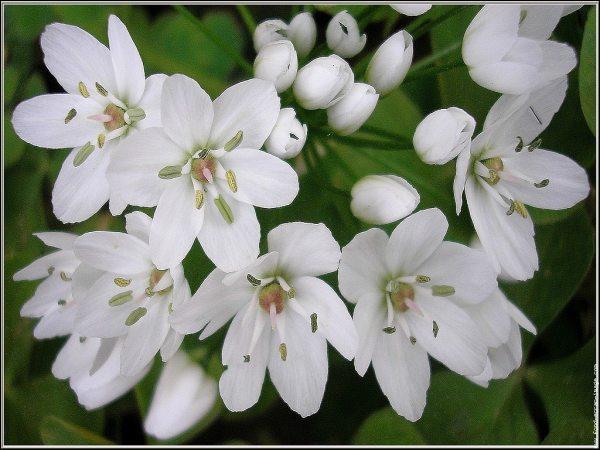 Quelles sont ces fleurs que Paddington met sûrement dans sa marmelade ?
