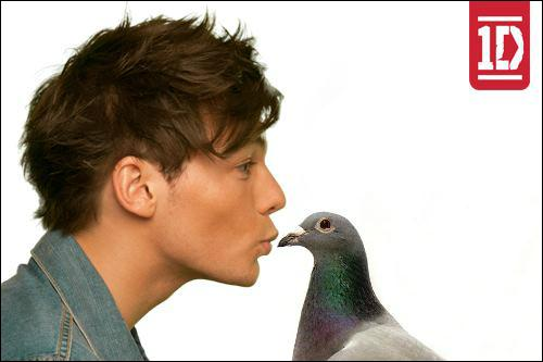 Comment s'appelle son pigeon ?